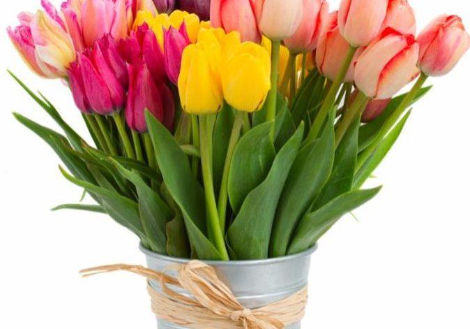 tulips_in_bucket